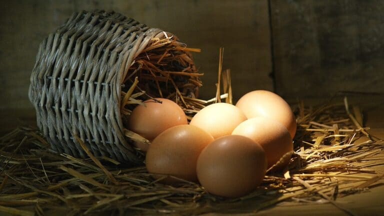 Why Roz Khao Ande? (Eggs: The Superior Superfood, Benefits, 8 ways to cook them)