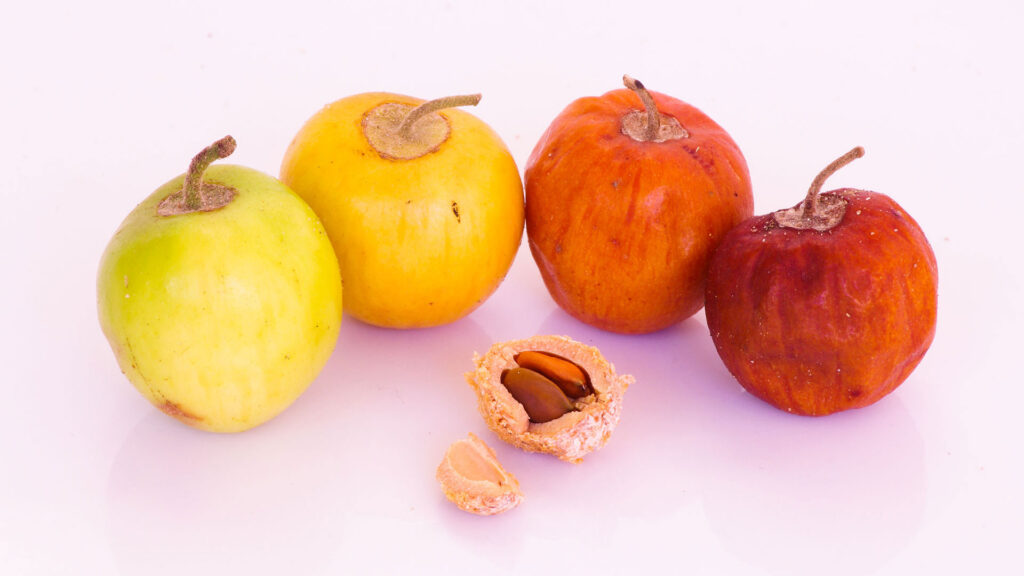 Jujube Fruit, Health Benefits, Its All About Journey - Indian Jujube (Ber)